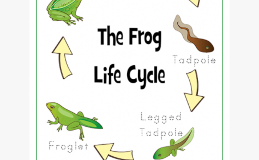 Free Life Cycle Of Frogs lesson plan! FREE DOWNLOAD!