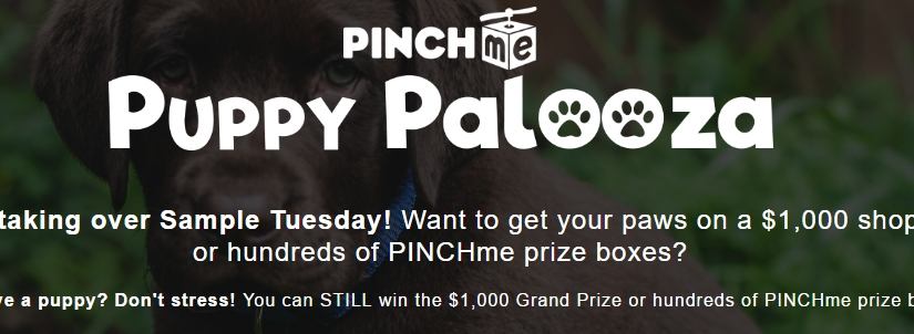 Want to get your paws on $1,000 or hundreds of PINCHmeprizes?