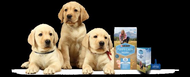 puppy_kit_dog_cutout-FINAL.png